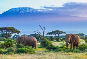 Photograph of African savannah with elephants